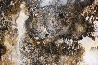 elewacja i ocieplanie chroni przed grzybami i pleśnia